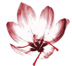ilustración marca Oro Rojo Comunicación